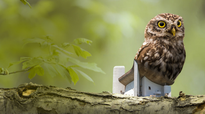 Legendary Bird Home 2021 architecture competition - design a bird home to fund wildlife charities!